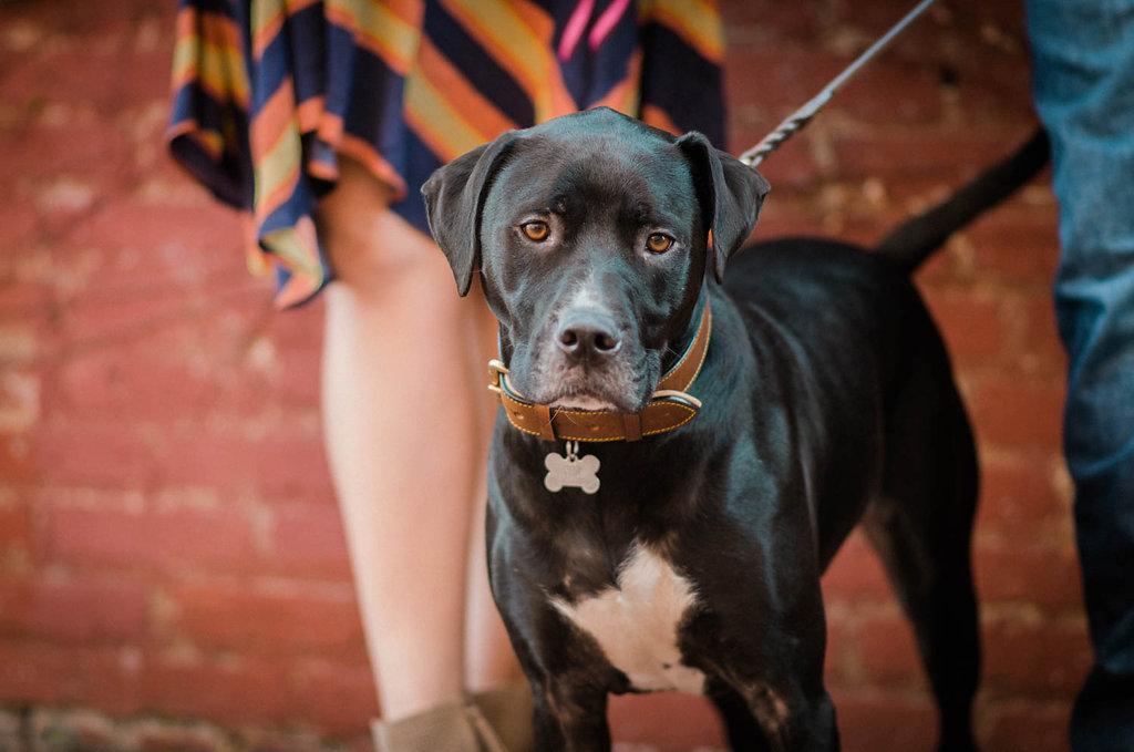 crispus attucks park engagement session park dog photo