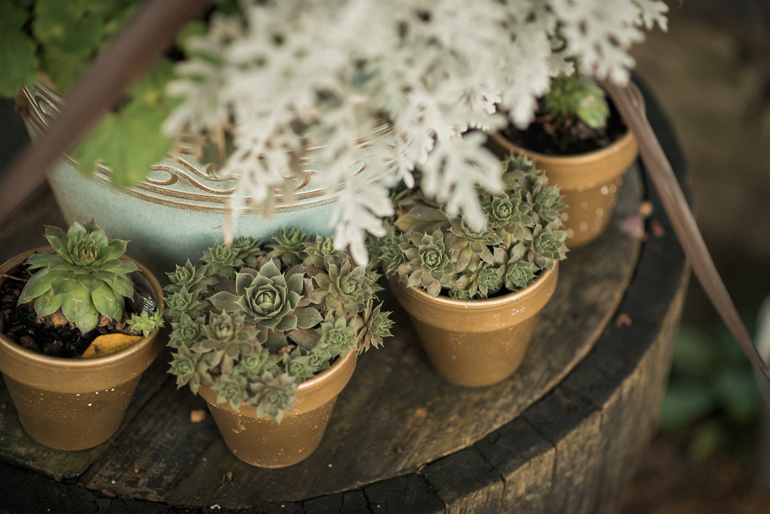 Ferns and succulents in pots at wedding