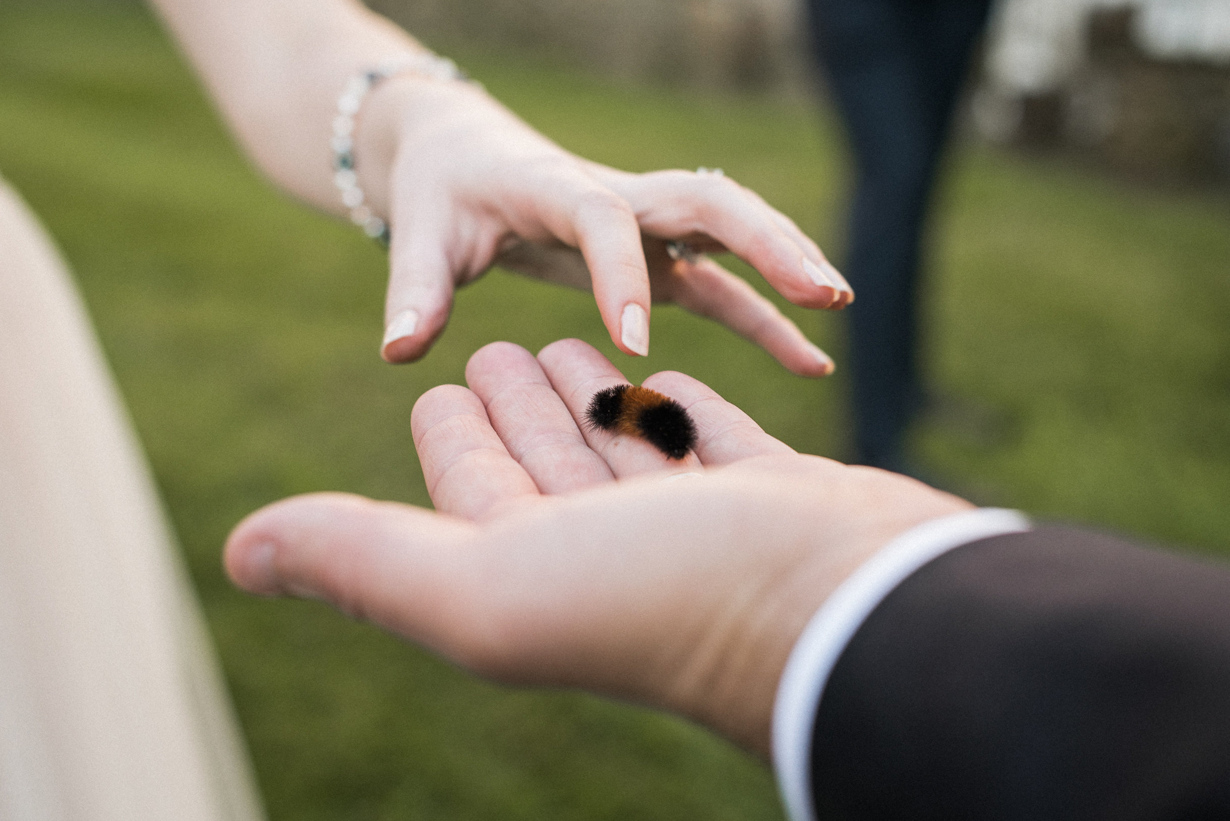 Bride touching caterpillar in groom's hand
