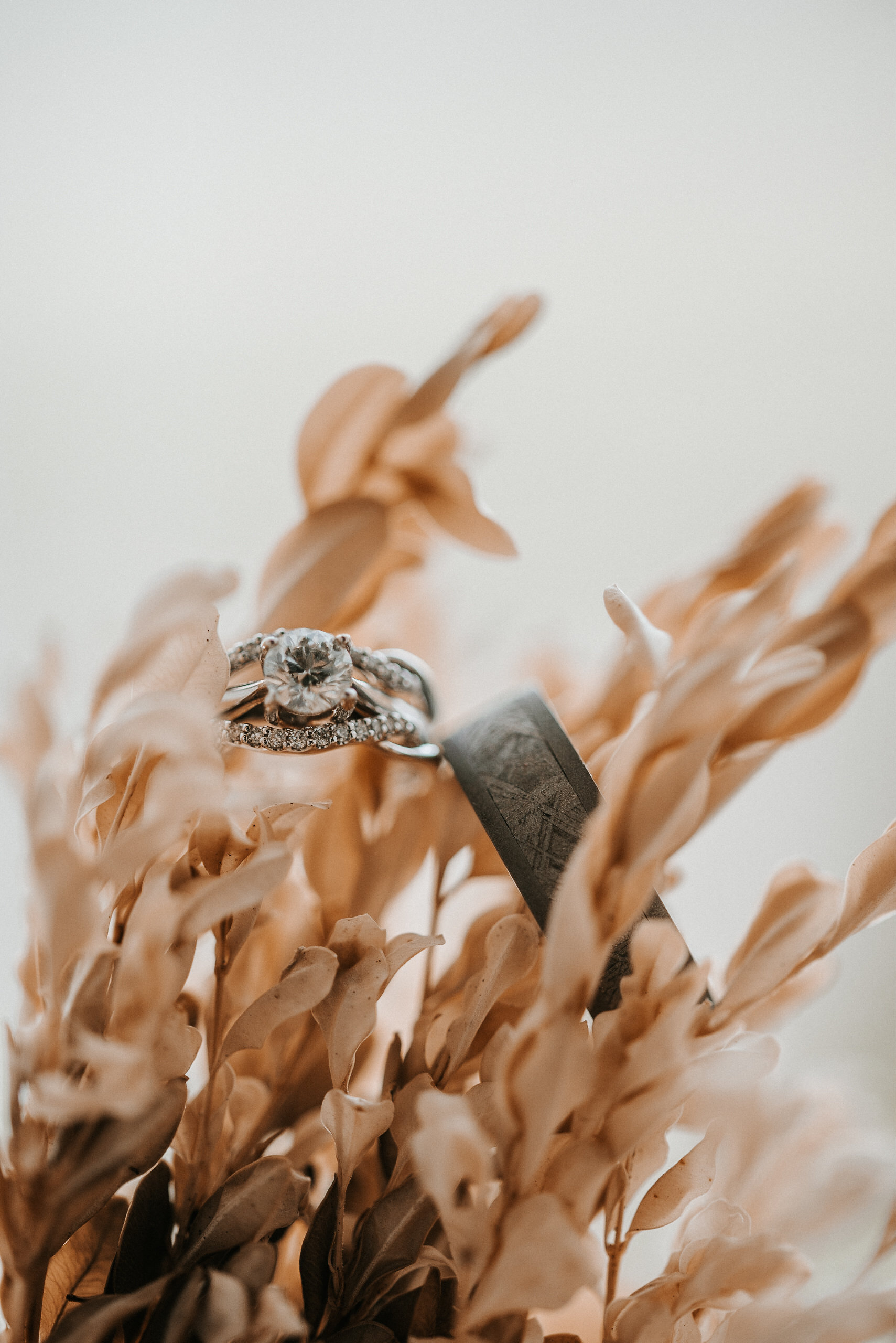 Wedding rings on plant