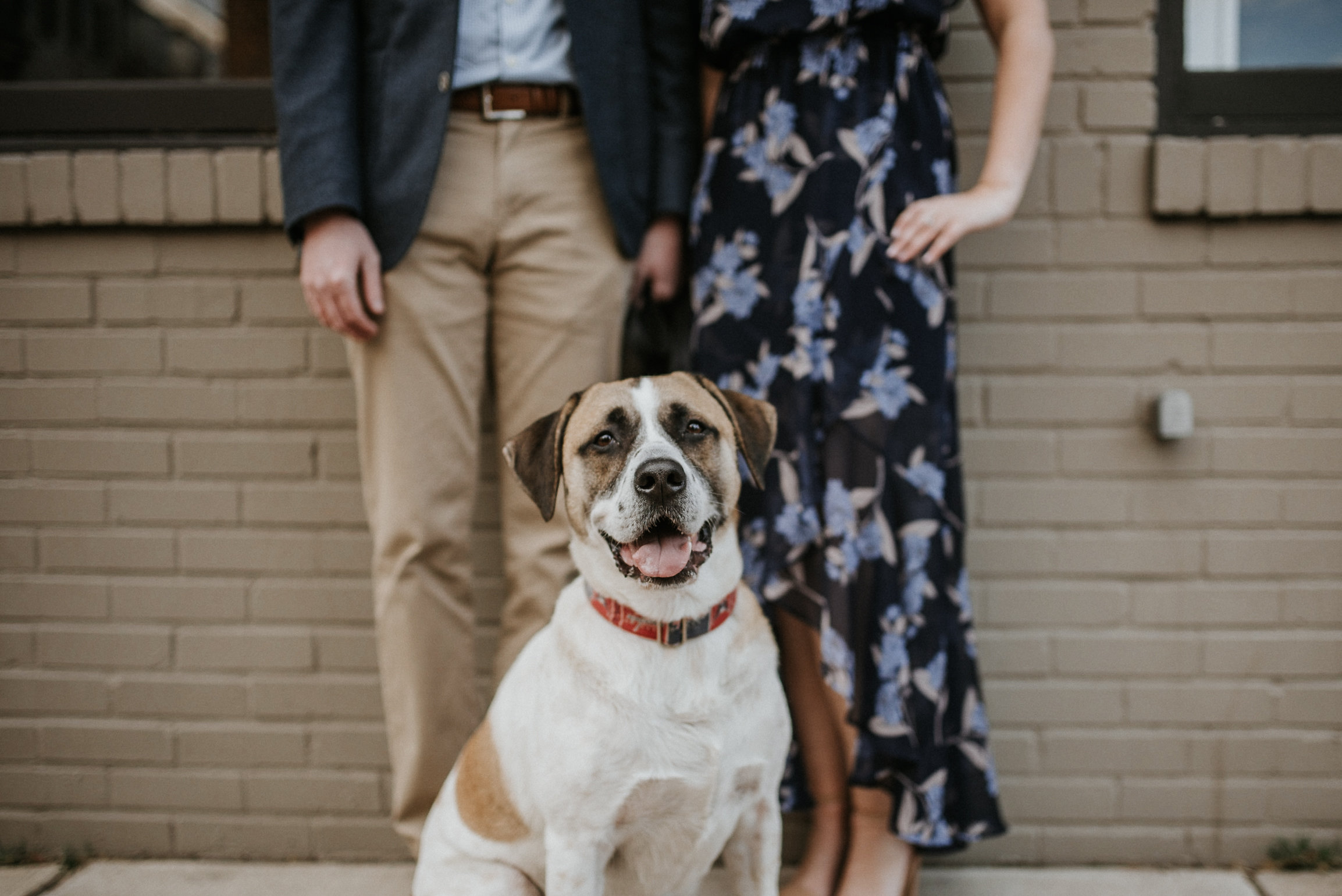 Dog standing in front of owners