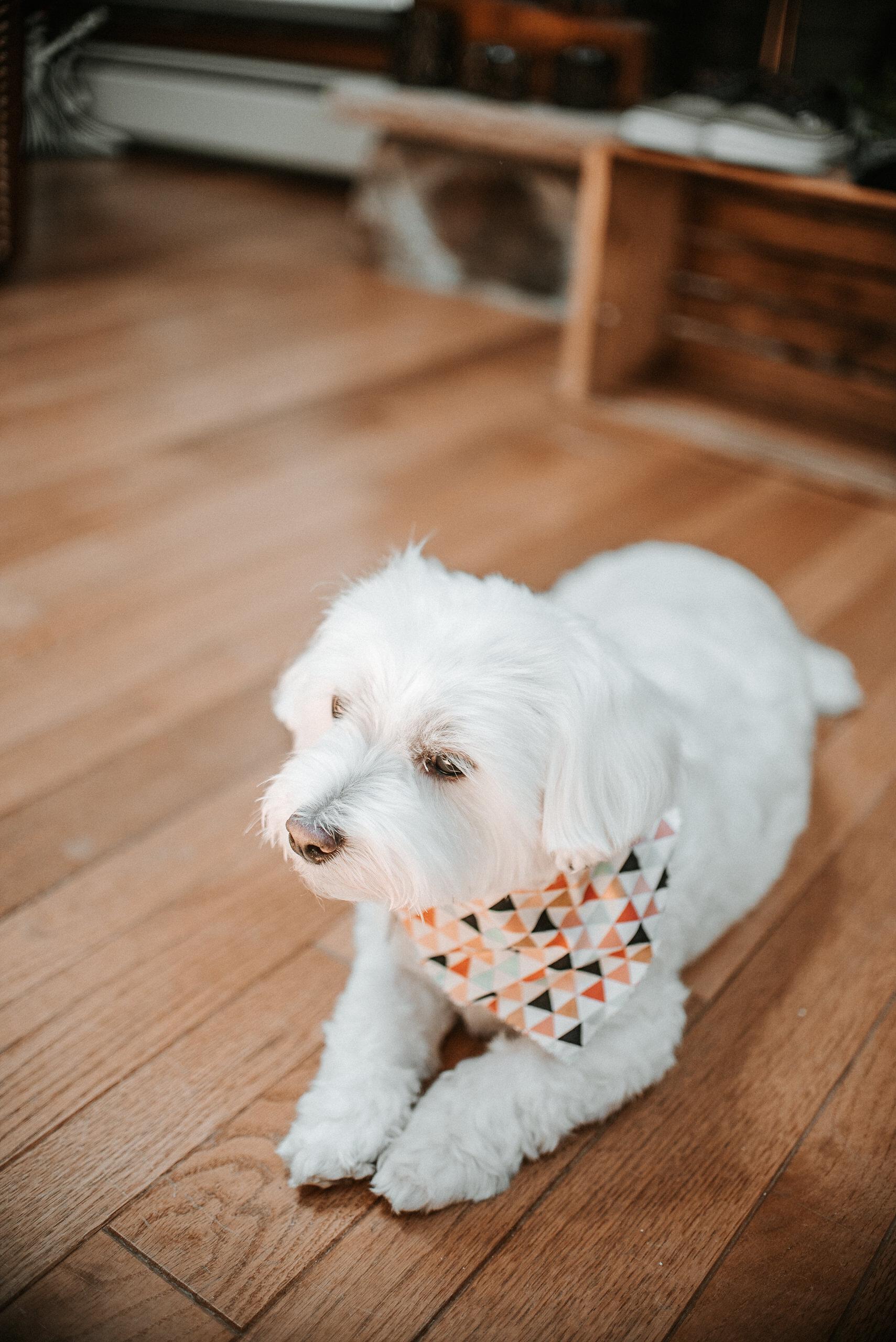 Dog in bandana lying on porch