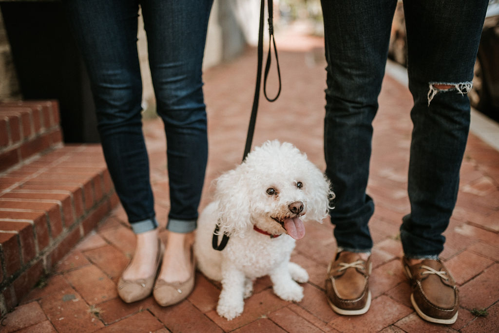 couple posing with their dog during engagement session at H Street in Washington DC