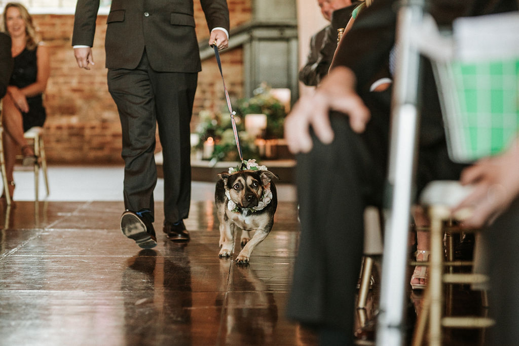 dog walking down the aisle at Inn at the Old Silk Mill