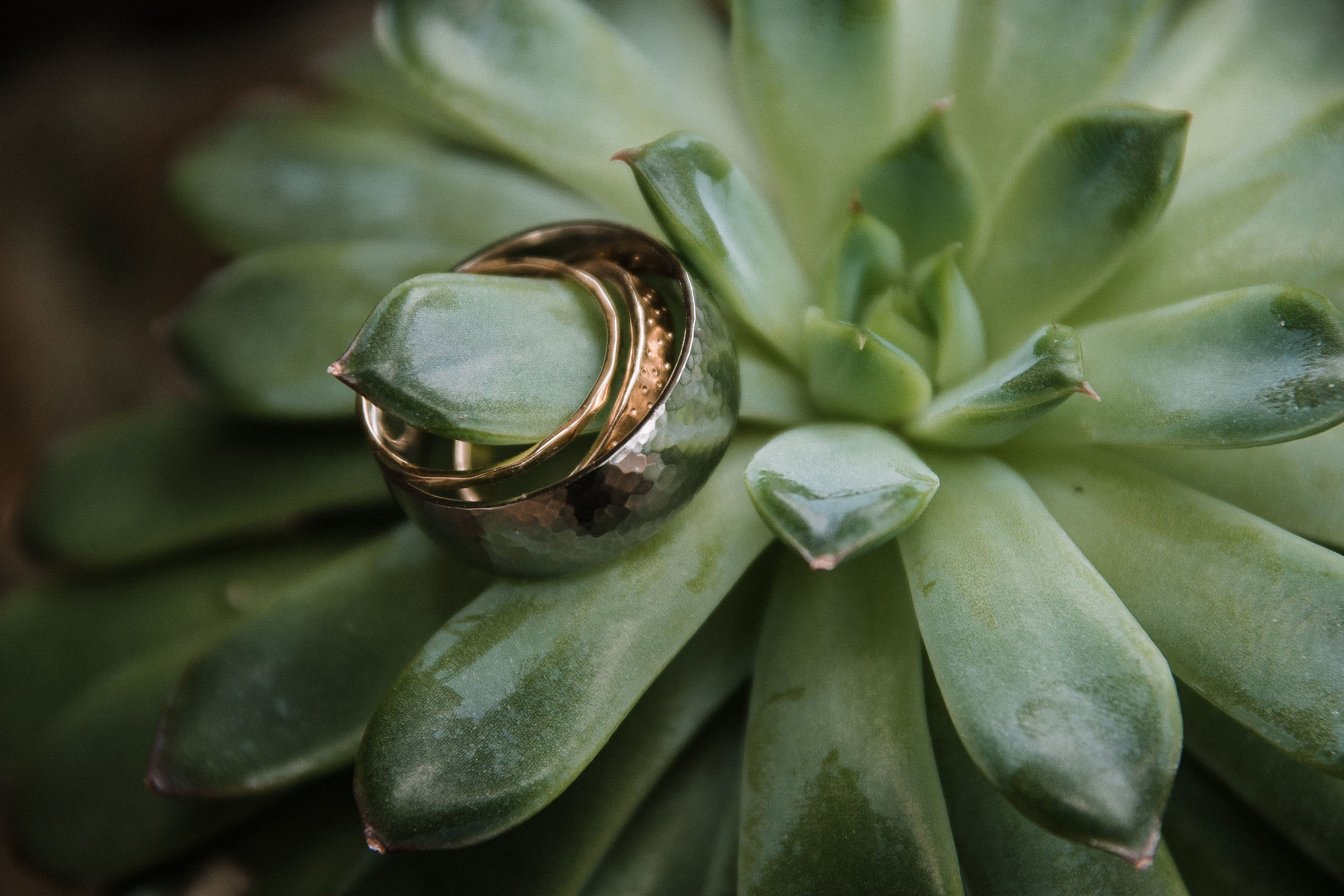 detail shot of wedding rings at MAVFC Reception Hall