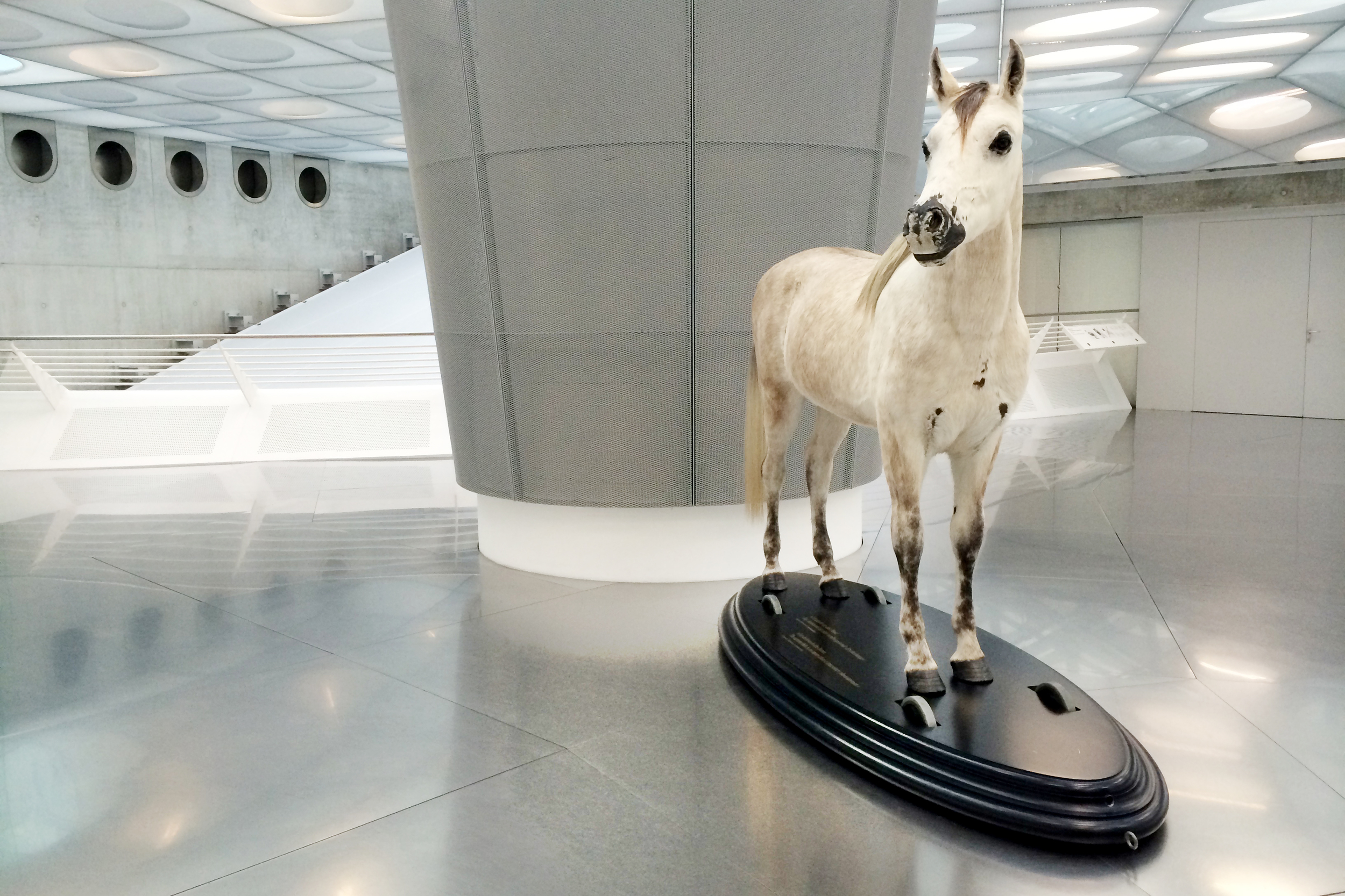 The original mode of transportation—it's one horse-power :)