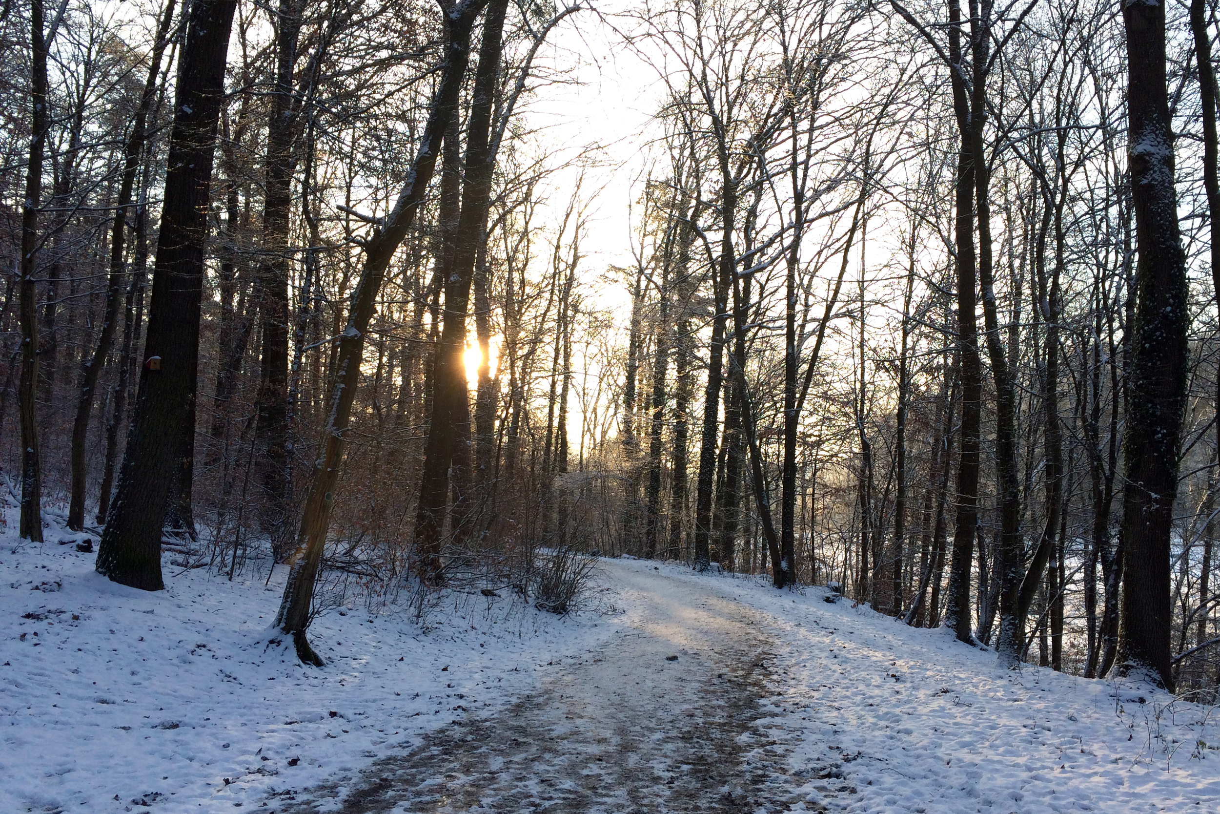 These winter pictures were taken the week of Christmas — right after a big snowfall.