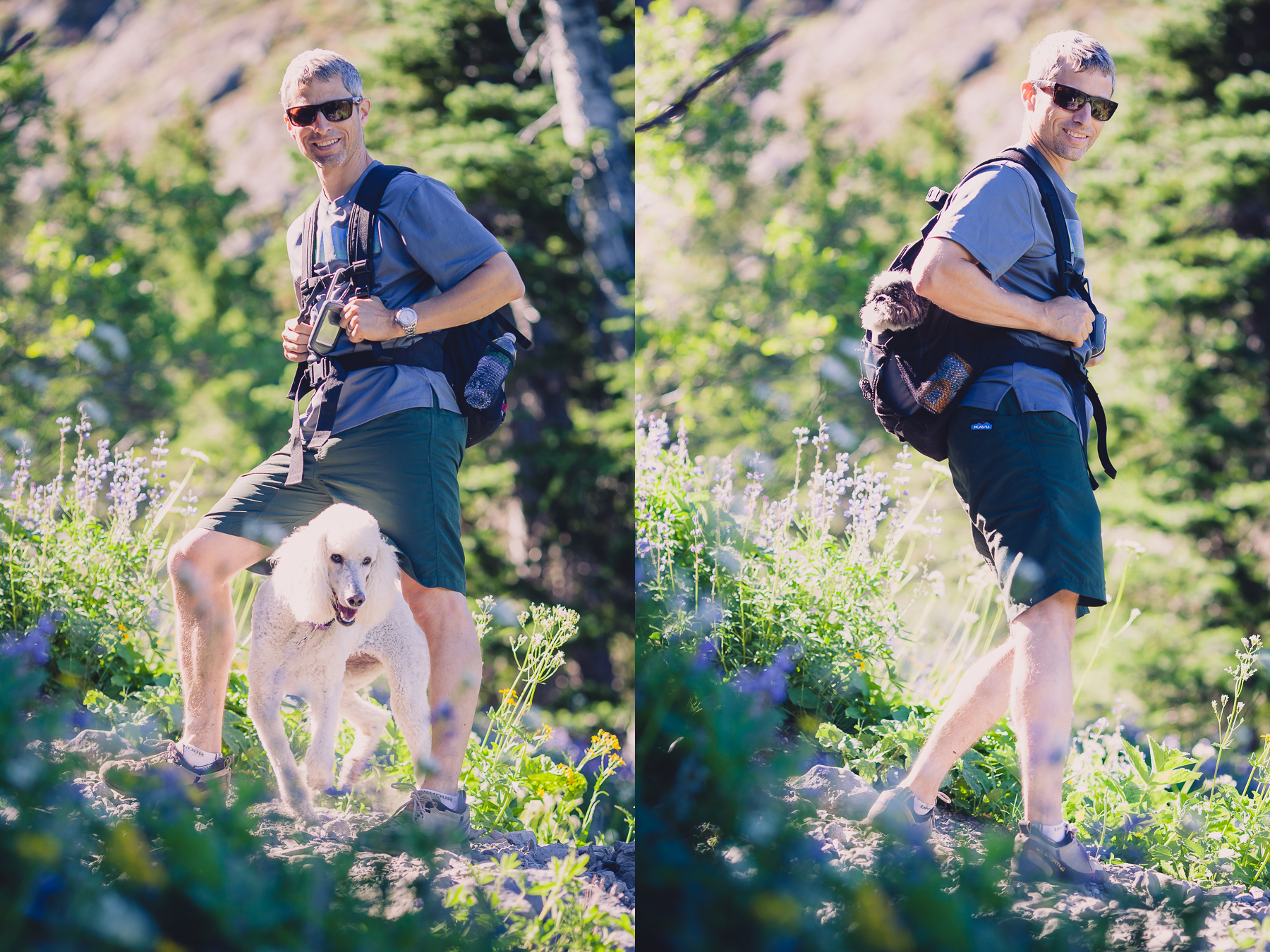 Left: Sasha the poodle photo bombs Eric's portrait. Right: Joey winces at the camera from the pack.