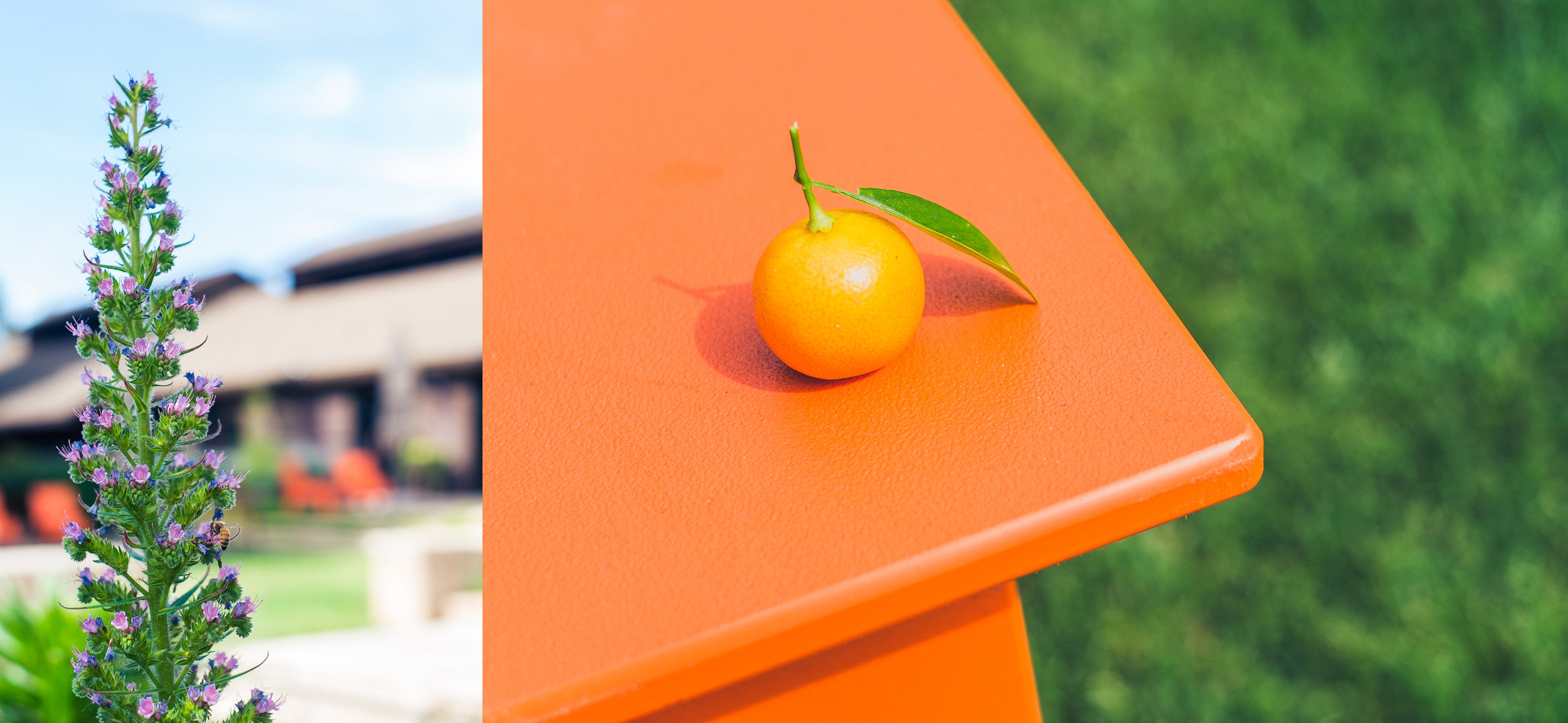The VML tasting room & an unidentified citrus fruit on an orange table