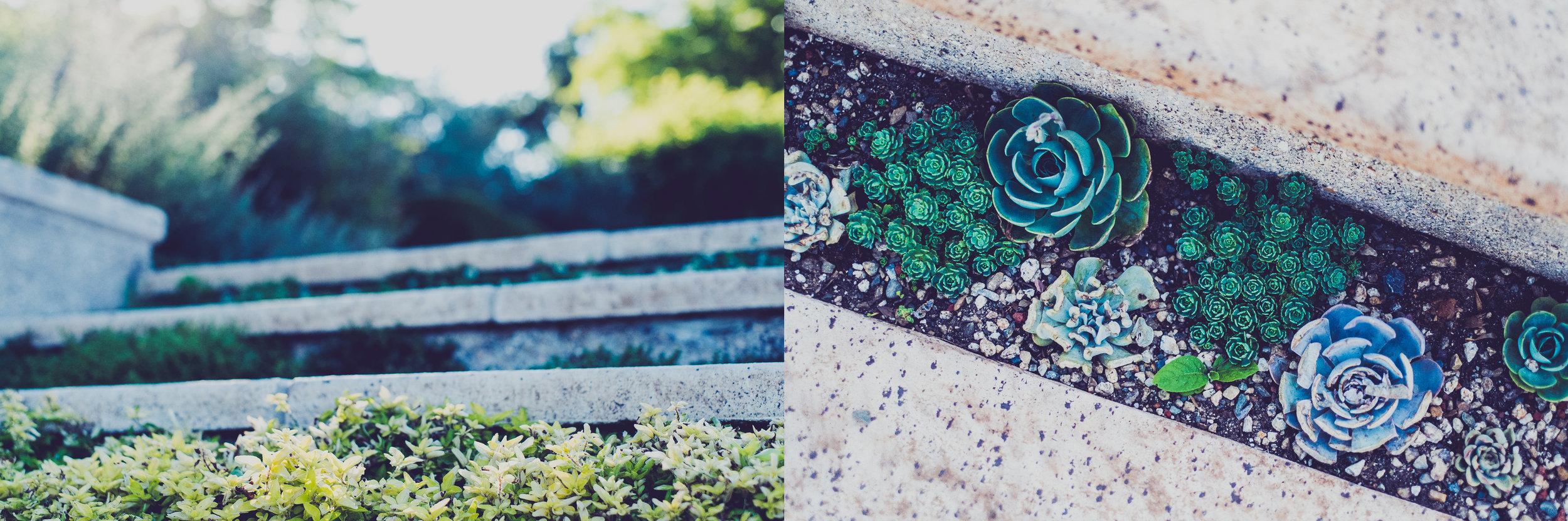 VML garden staircase & succulents
