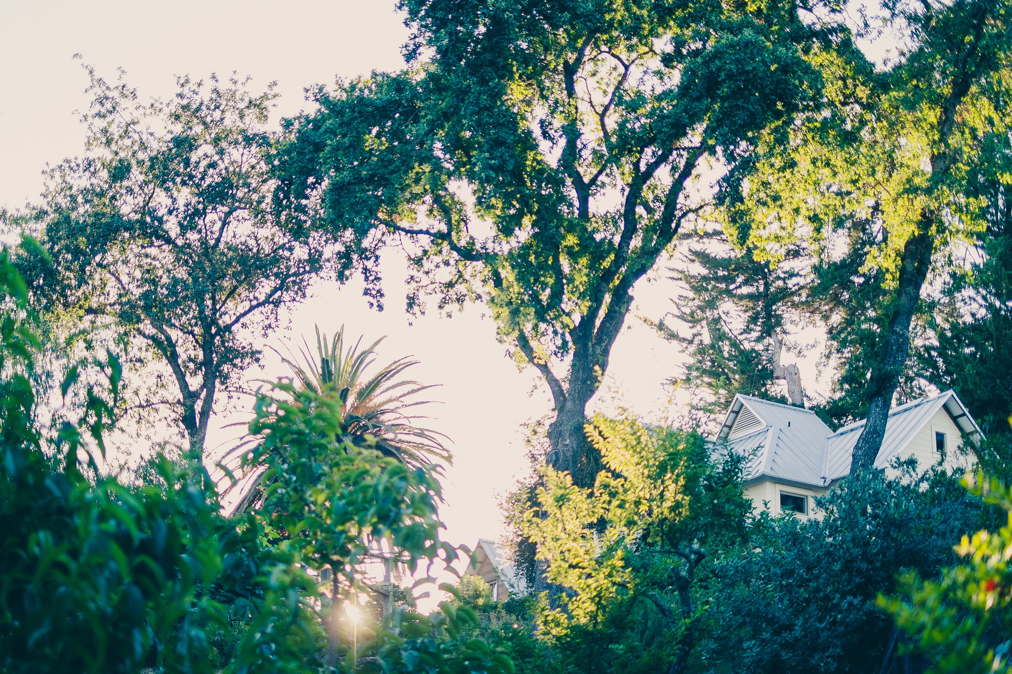 The magic hour overlooking the neighbor's trees