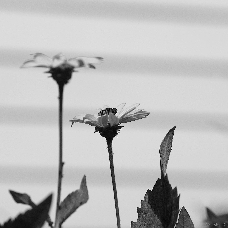 bee_atop_flower