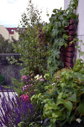 Hopfen und Birke Dachterrasse Berlin