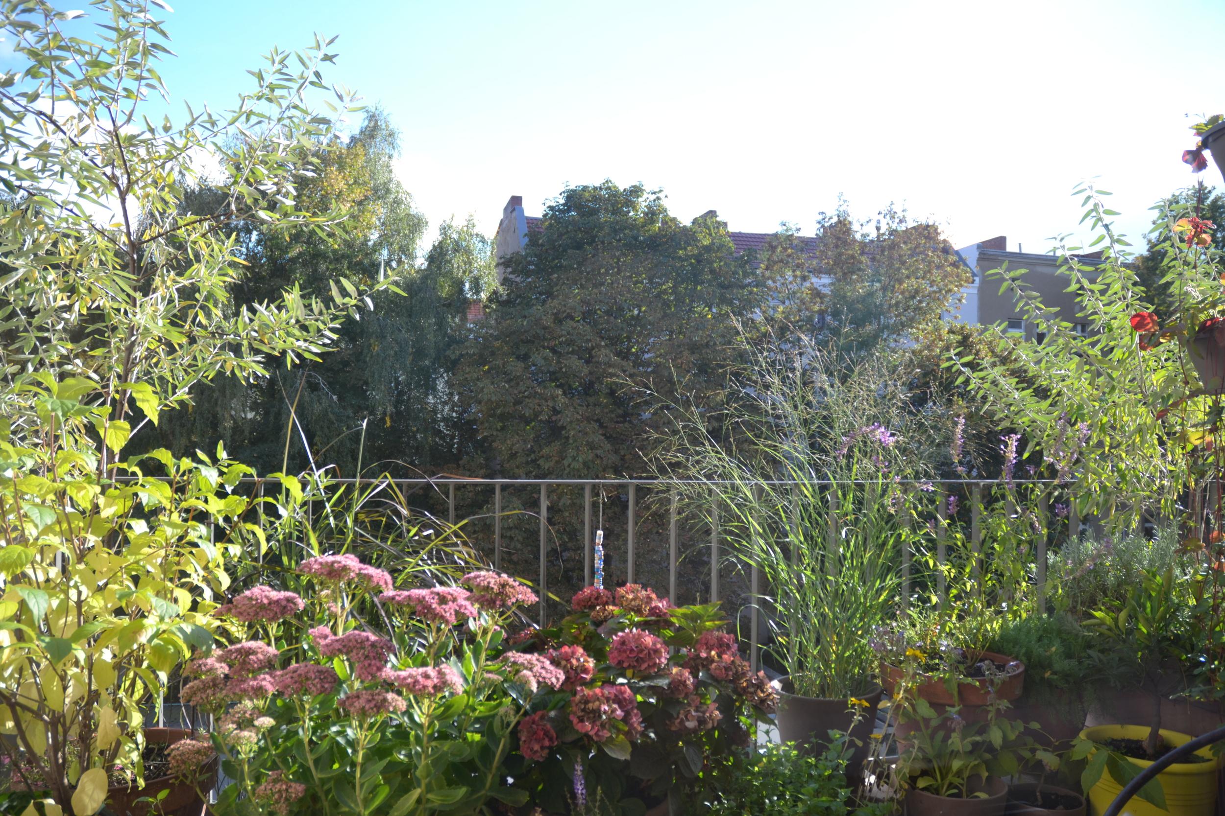 Bepflanzung Suedbalkon Berlin