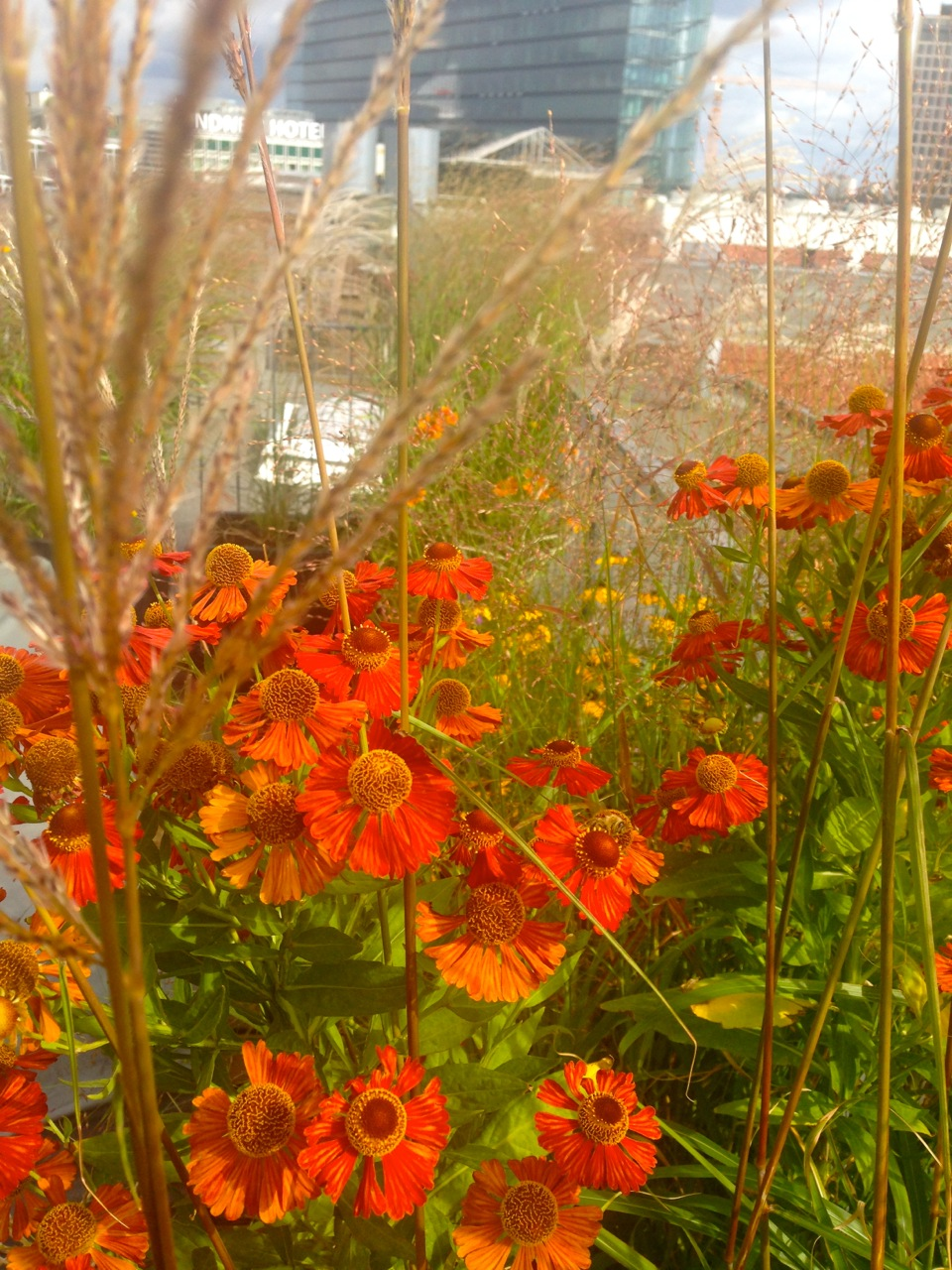 Bepflanzung Dachterrasse Berlin