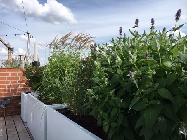 Bepflanzte Dachterrasse