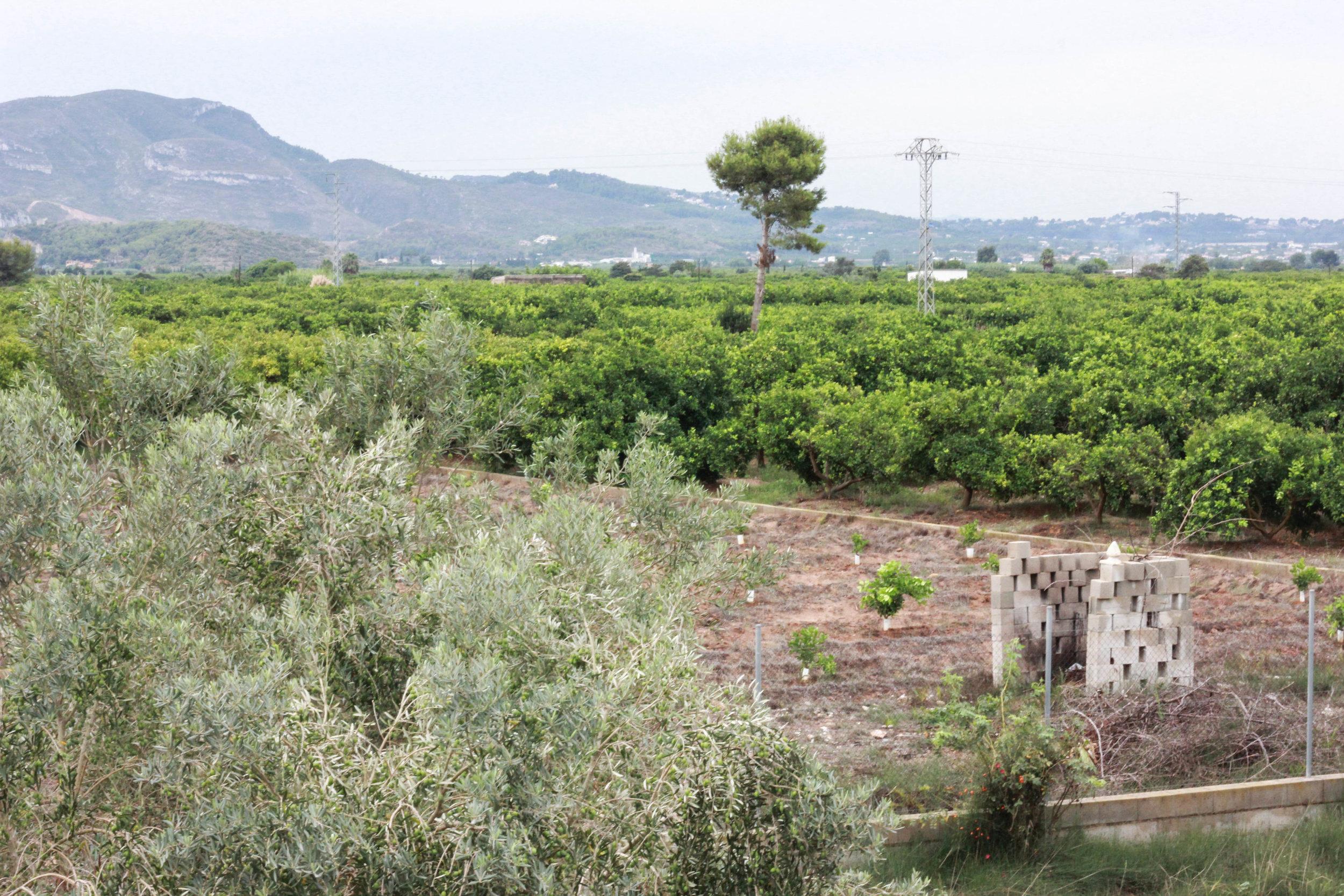 Spain-162.jpg