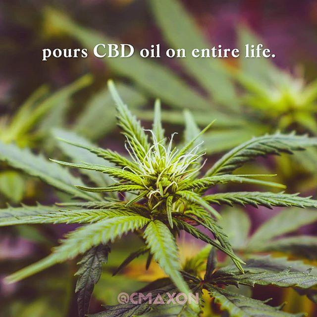 accurate . 🌱💧 . . . . . 📝 @missmarijuanaofficial 📸 @joseluissp.ph #cbdoil #hempoil #cannabisculture #cannabiscommunity #womengrow #cbd #terps #medicine #CBD #empoweringwomen #madewithunsplash #naturalhealing #craftcannabis #organicallygrown #hemp #oregongrown #legalize #normalize #girlpower #girlboss #cbdworks #cbdlife #soberissexy #cbdgirlboss