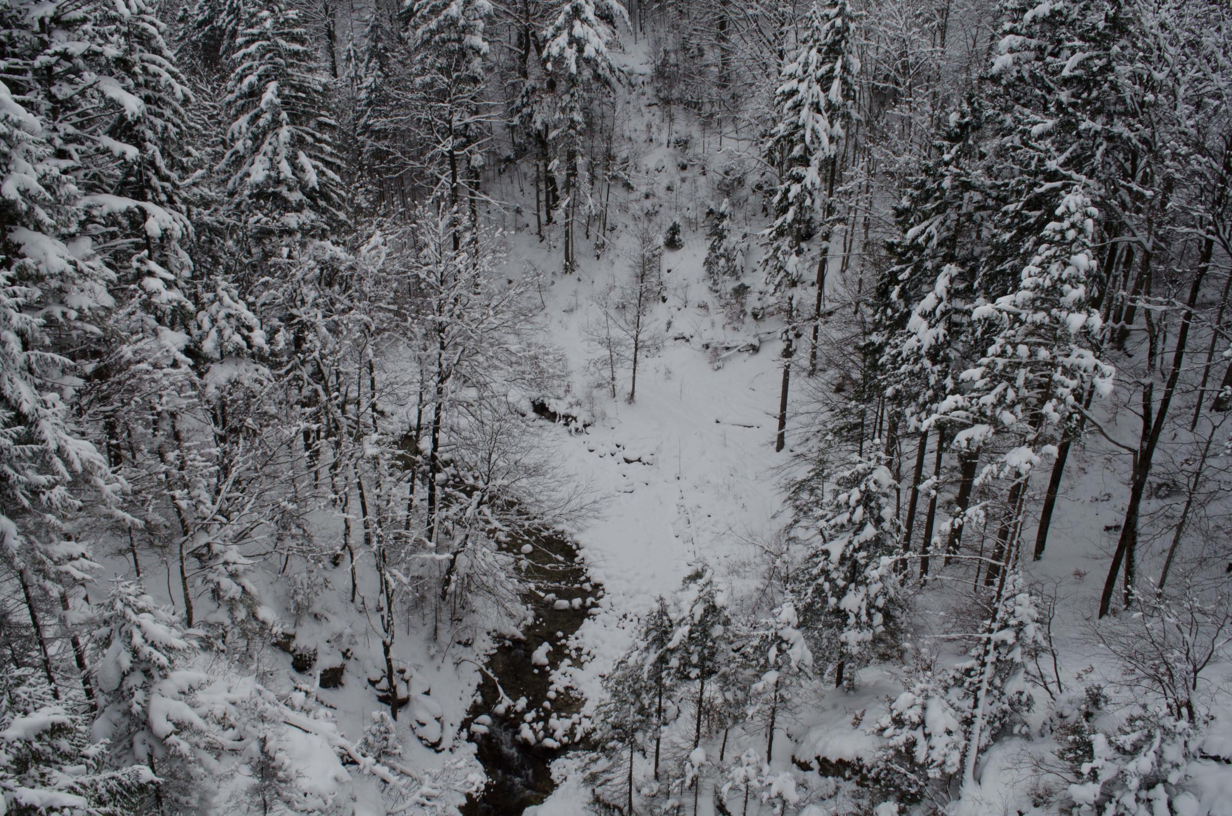 Neuschwanstein-104.jpg