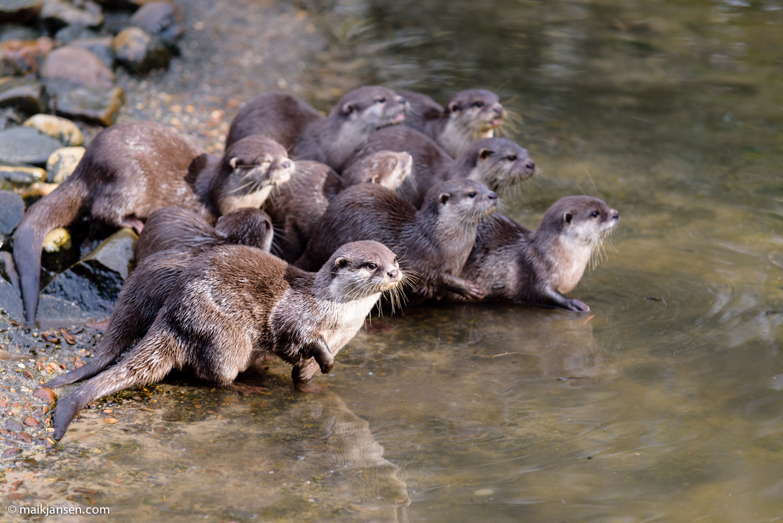 Otter: 1/250 sec @ f/4,0 ISO 200 FL170 mm