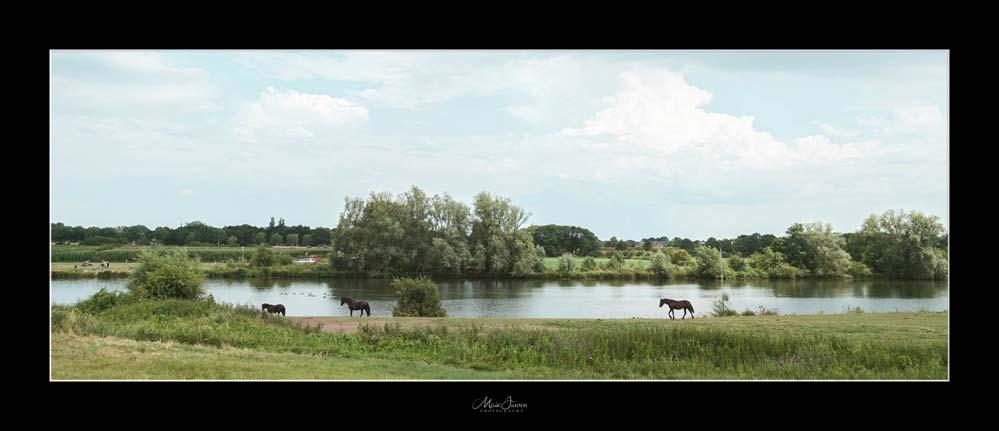 Paarden aan de Maas