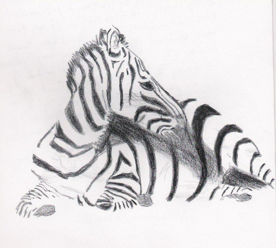 Animal 5 zebra.jpg