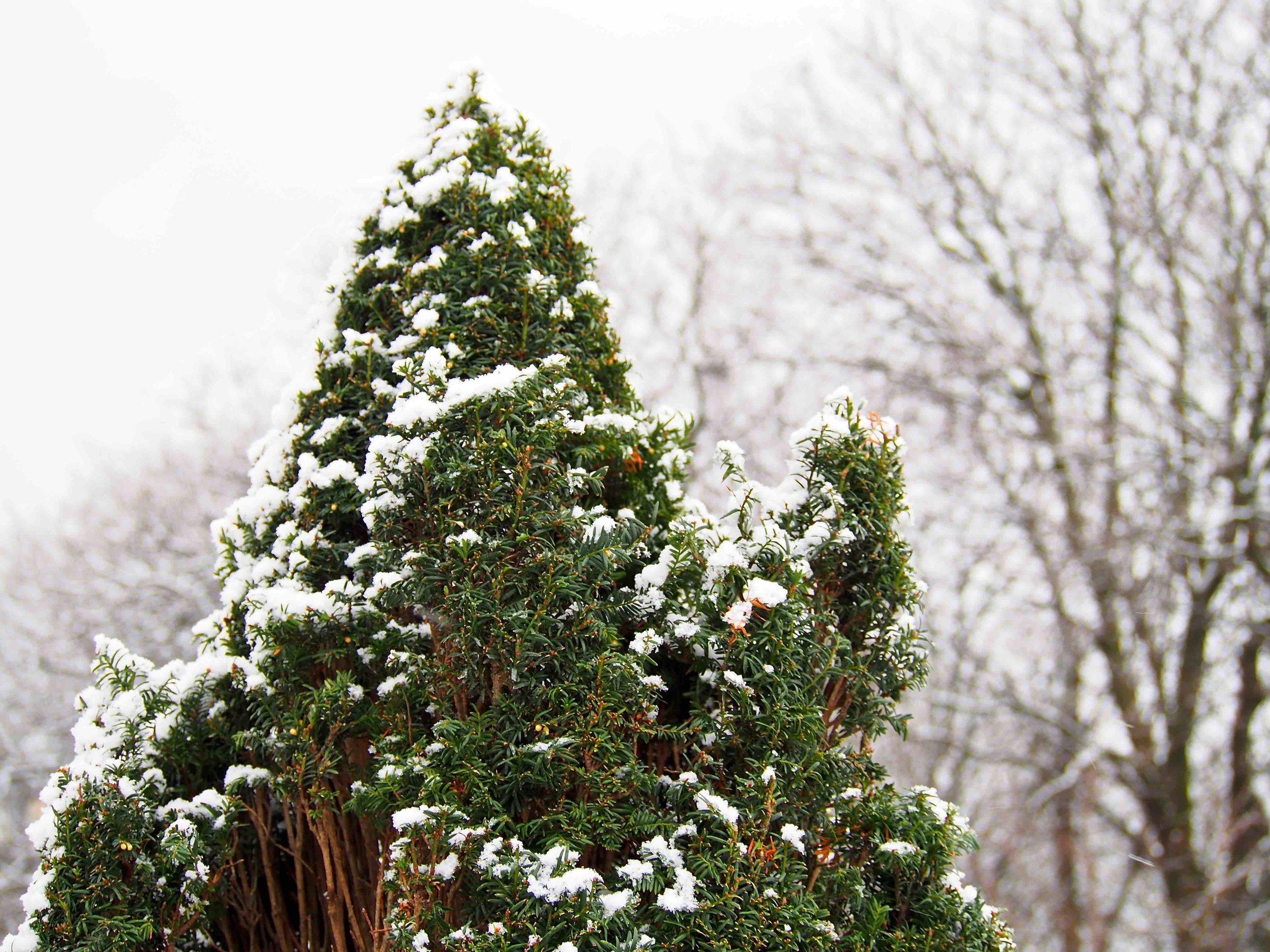winter 4.jpg