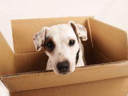 dog-in-moving-boxes.jpg