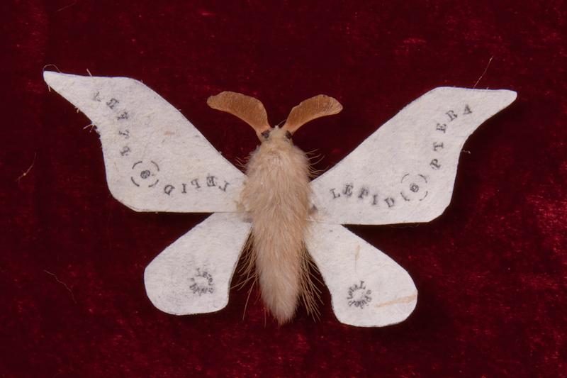 LEPID(O)PTERA  Lepidoptera