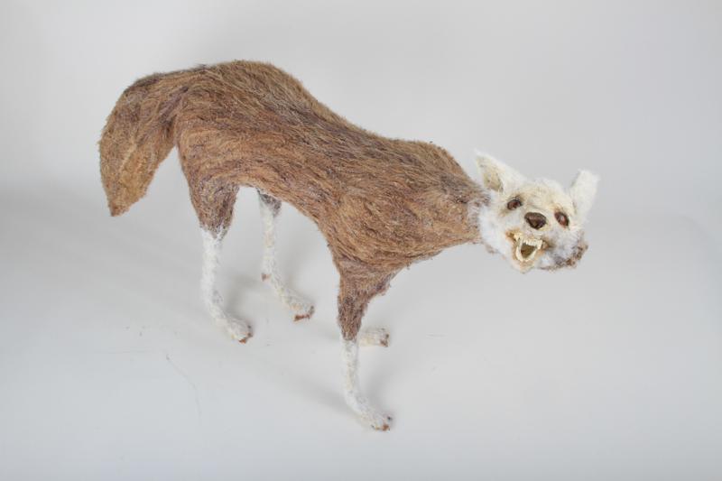 North American Fox - vulpes alopecurus