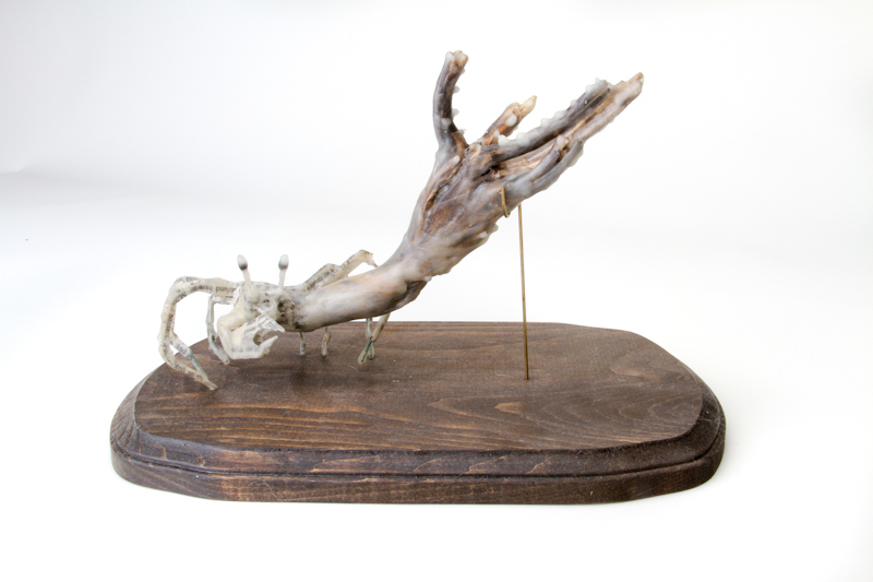 Kelli's Hammer Crab