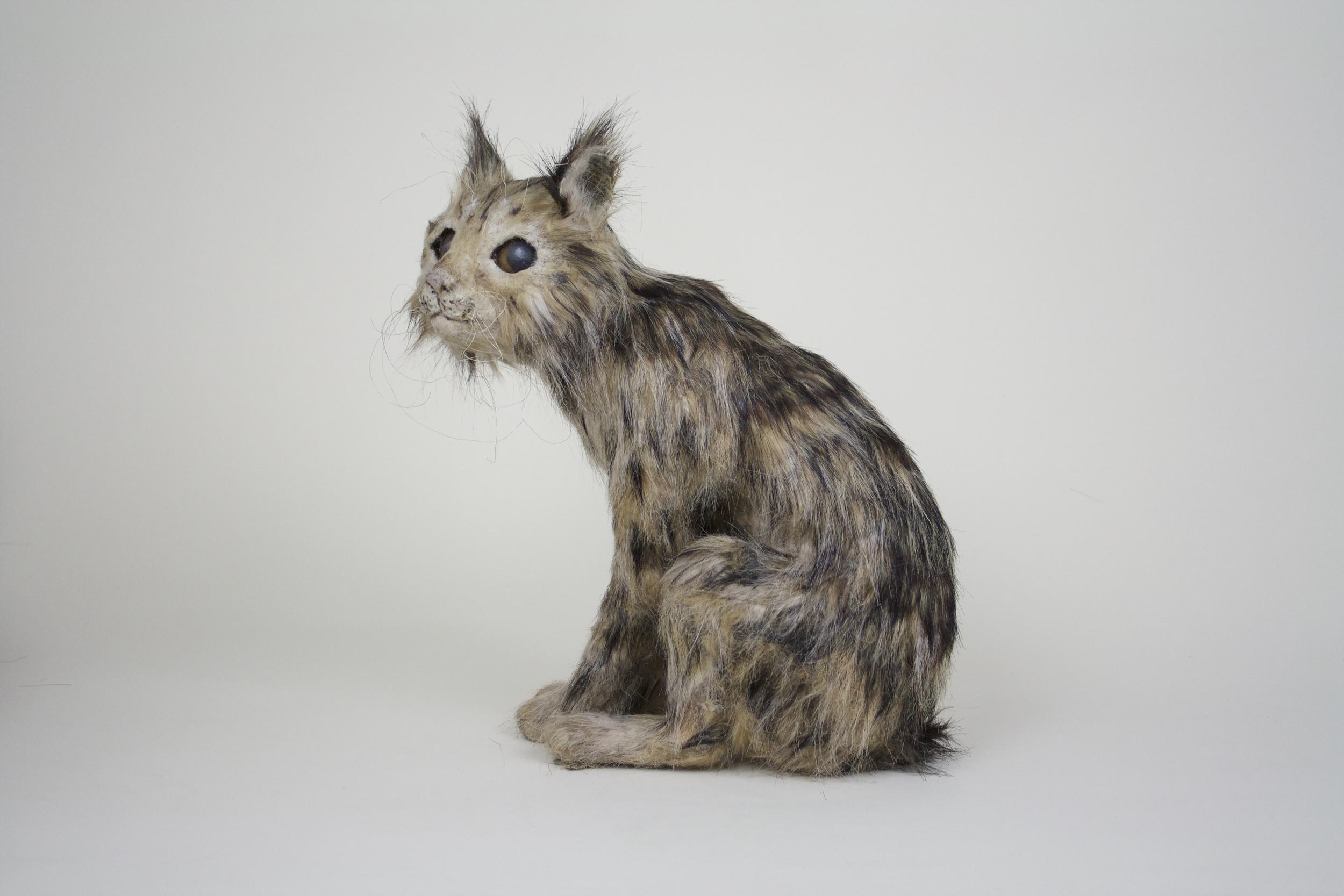 California Cave Bobcat, Female