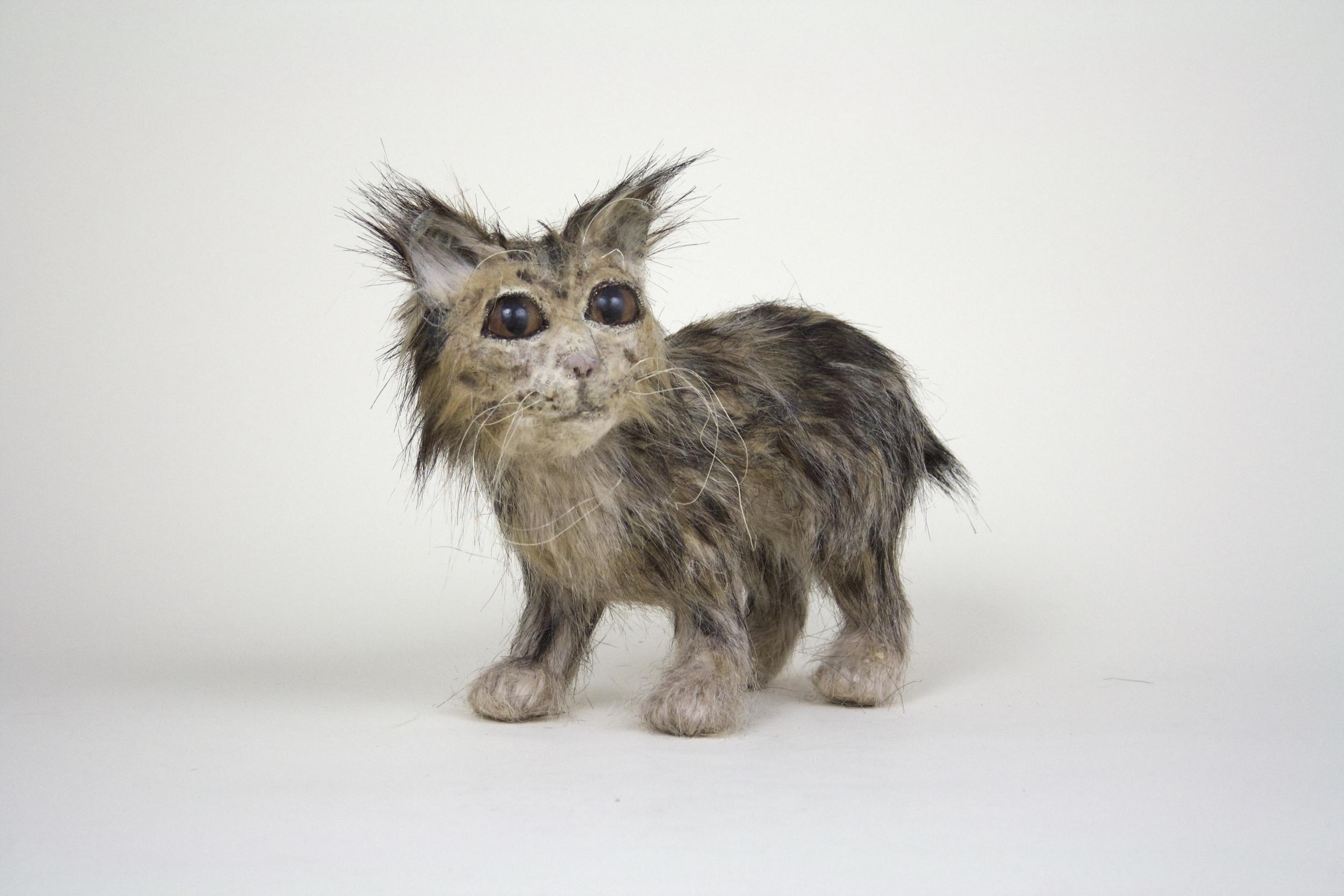 California Cave Bobcat, Kitten