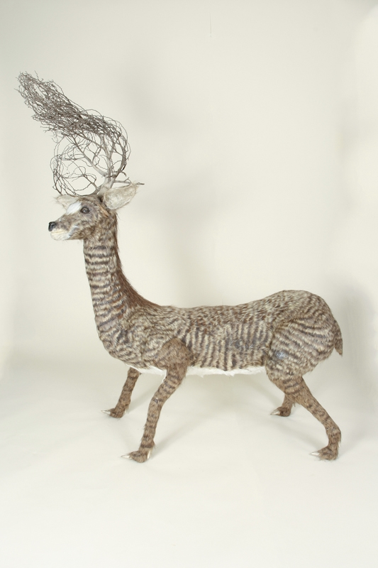 North American Striped Deer