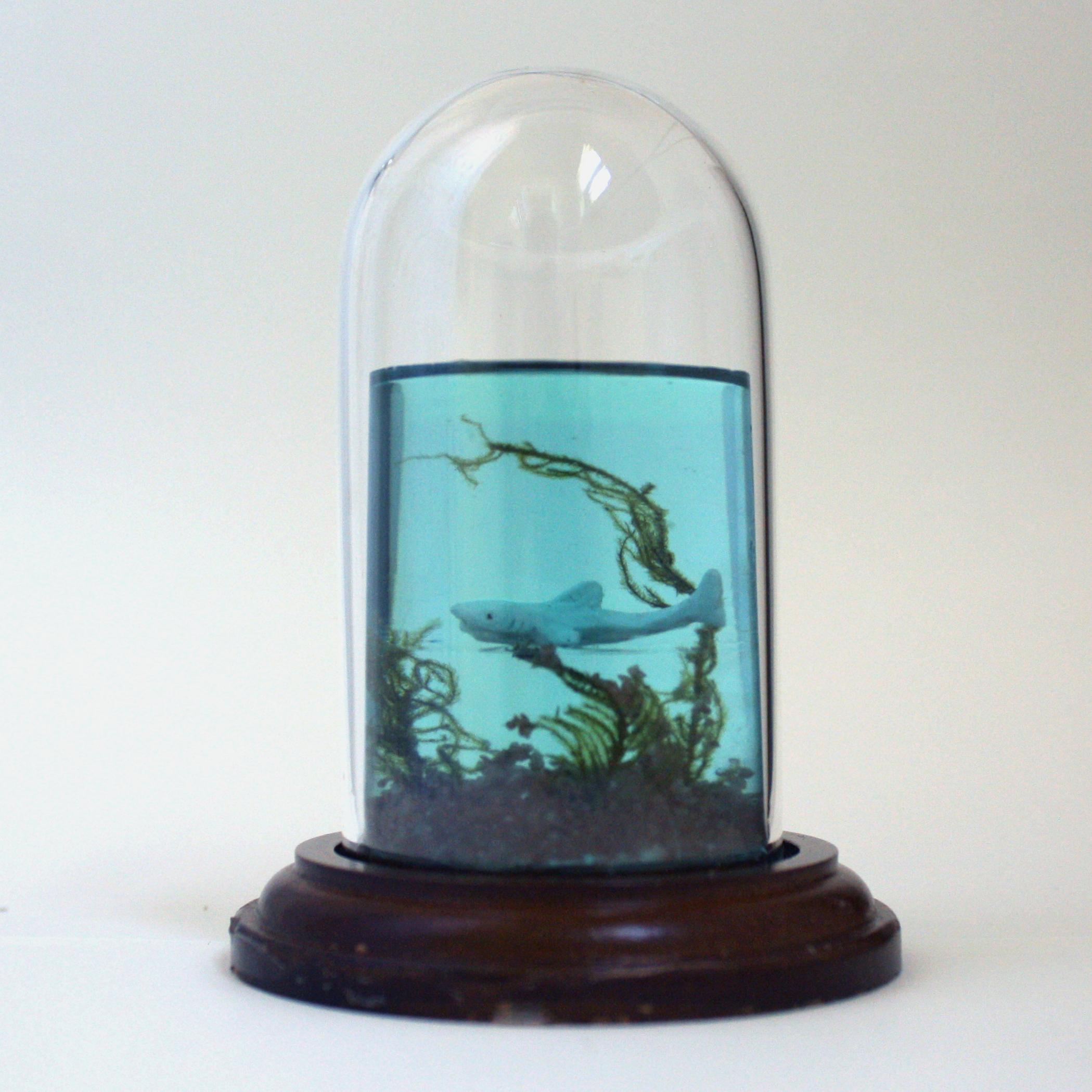kelpforest1.jpg