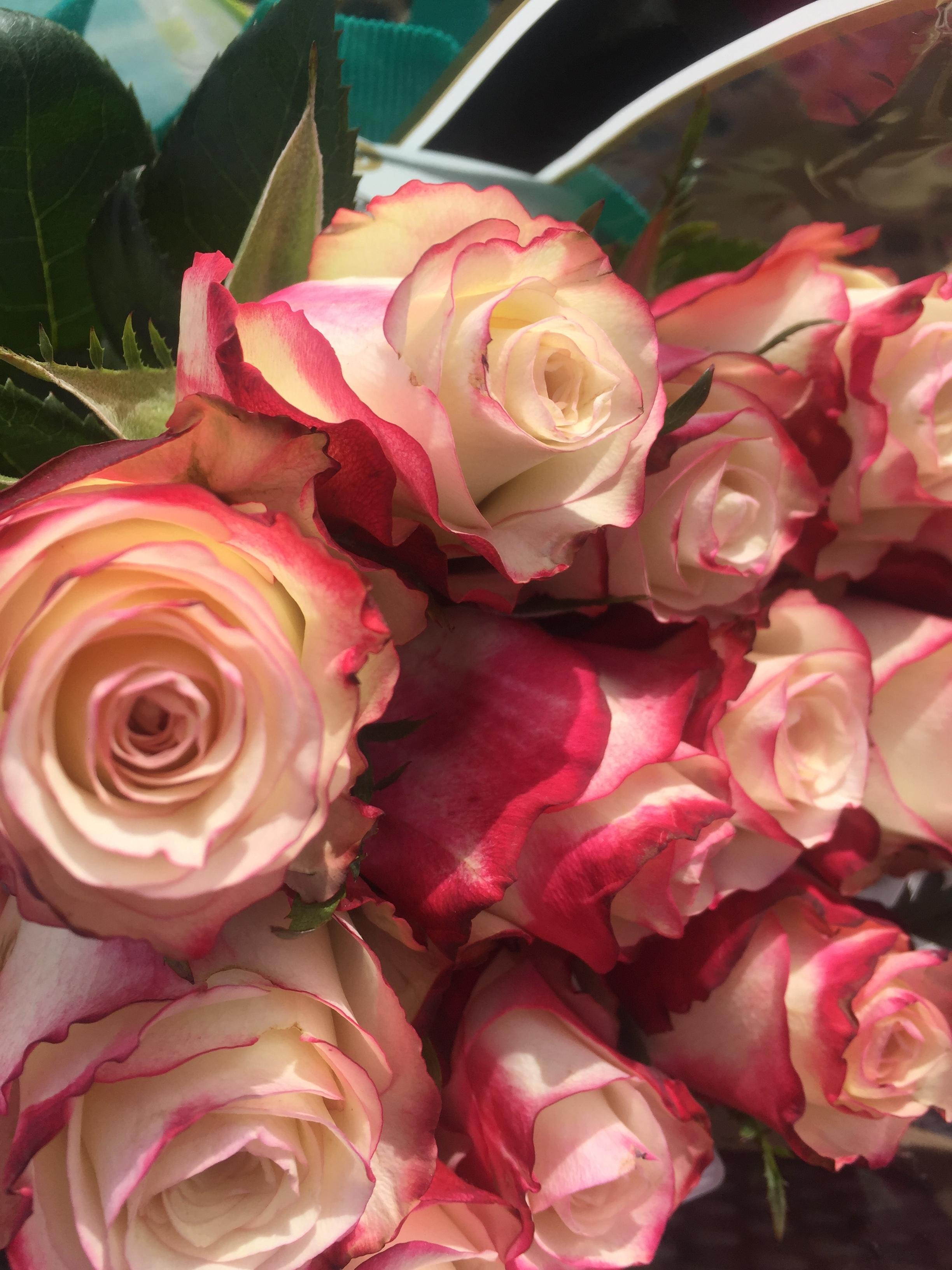 Rose fabric.jpg