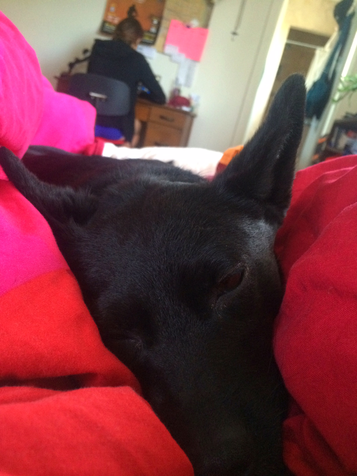 Neptune, the snuggle bat gets cozy while Anonabird studies in the background, my Monday morning view in NM.