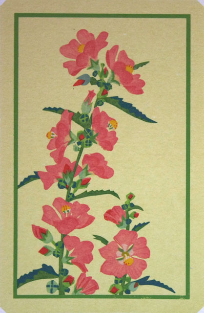 Globemallow (yellow background)
