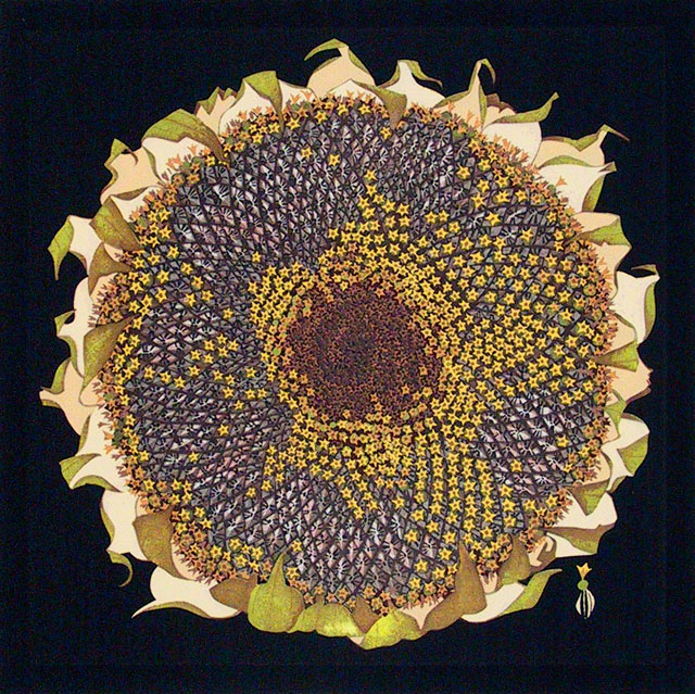 Seed Sunflower