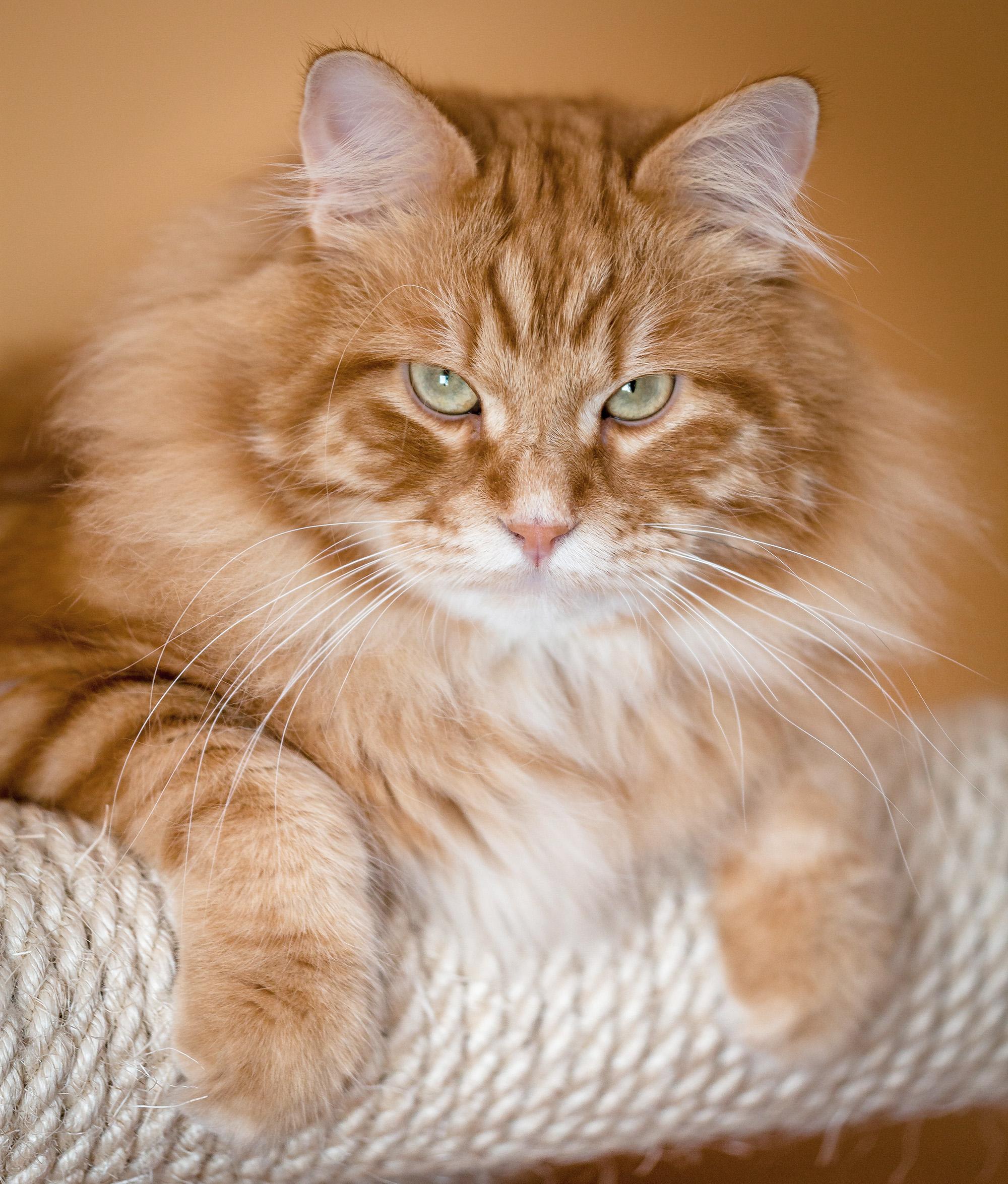 Mailo, the cat