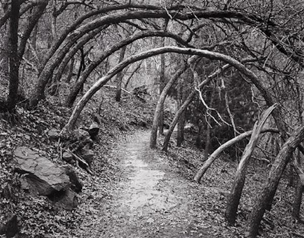 Oak-Forest-Trail.jpg