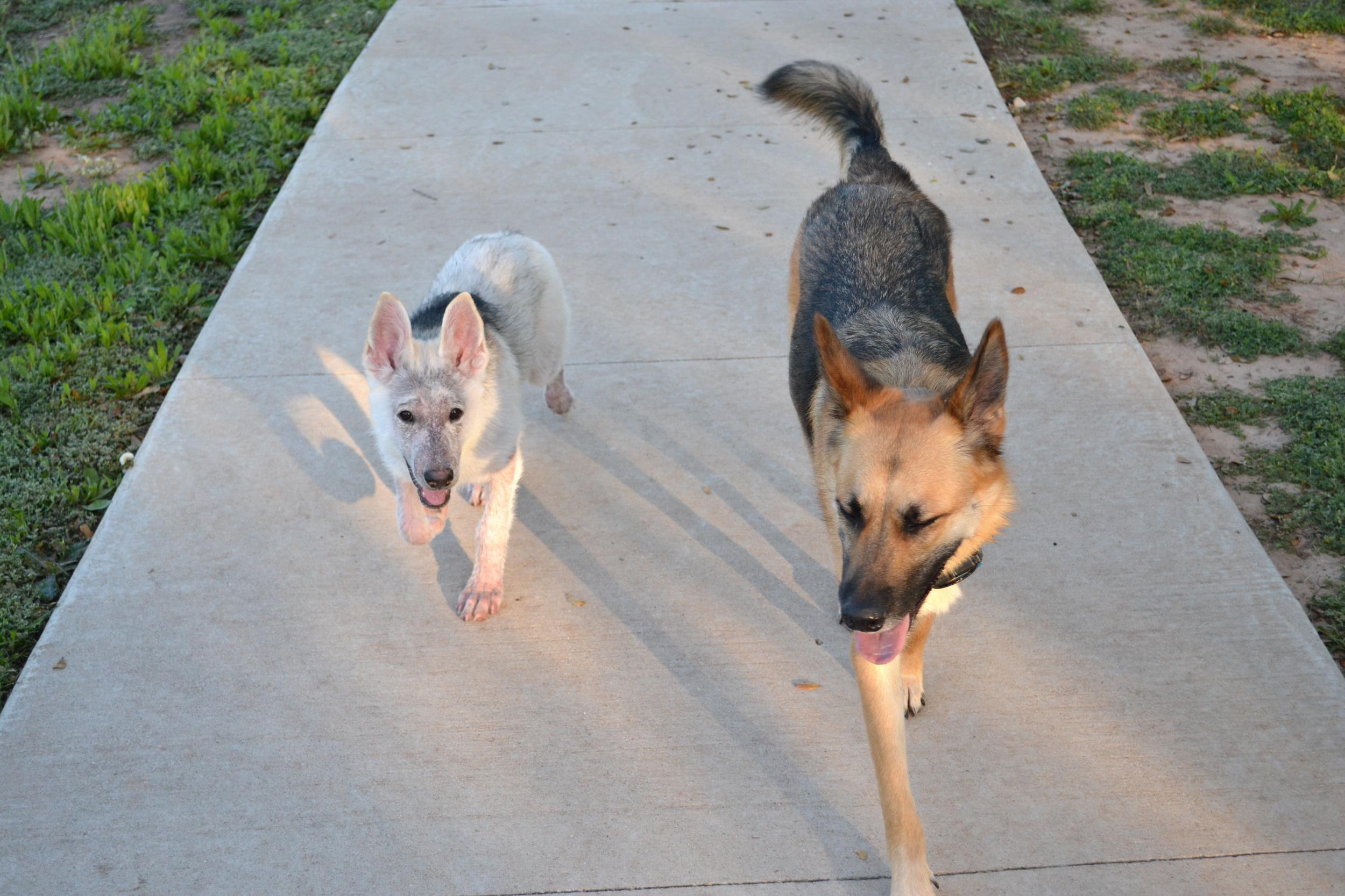 Group walk.jpg