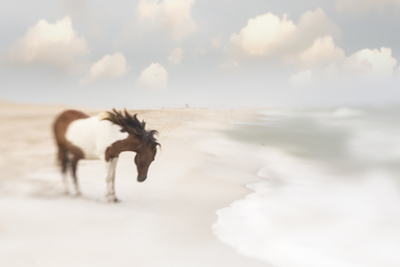 Assateaque Dreaming 1