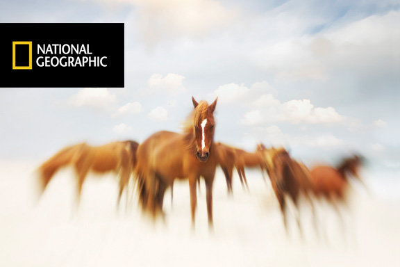 Selected to be shown at the National Geographic Museum Nov 1 - 10th.