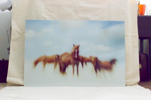 janlakey_assateaque_wild-horses-12.jpg