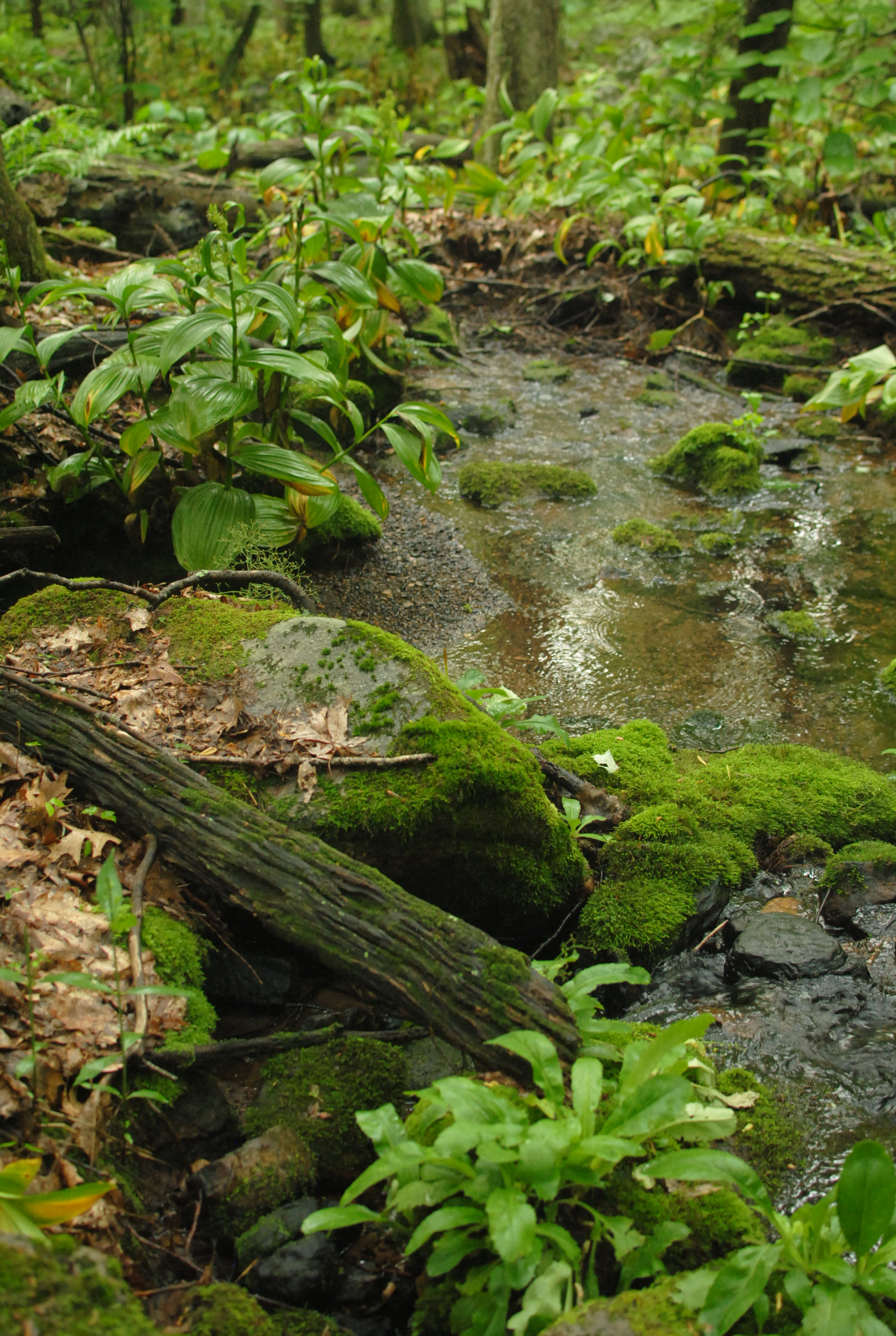 Lovely mossy stream.