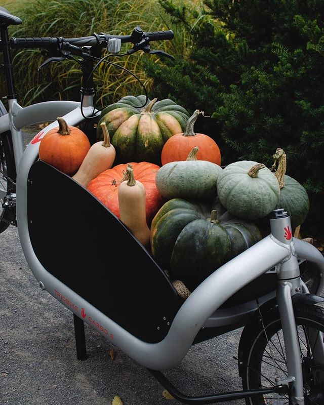 Happy Fall Everyone! This has to be one of our favorite shots of the season. Put together by @coniferesetfeuillus and their @triobike cargo bike. • • • #allovelomtl #velolifestyle #triobike #griffintown #quartiersducanal #vieuxmontreal #oldmontreal #cargobike #atwatermarket #marcheatwater #villemarie #lachinecanal #canallachine #plateaumontroyal #narcityquebec #narcitymontreal #mtlmoments #montrealjetaime #montreality #vancouvermom #mtlblogger #igersmtl #igerstoronto #igersottawa #igerscalgary #igersvancouver #lastenrad #torontolife