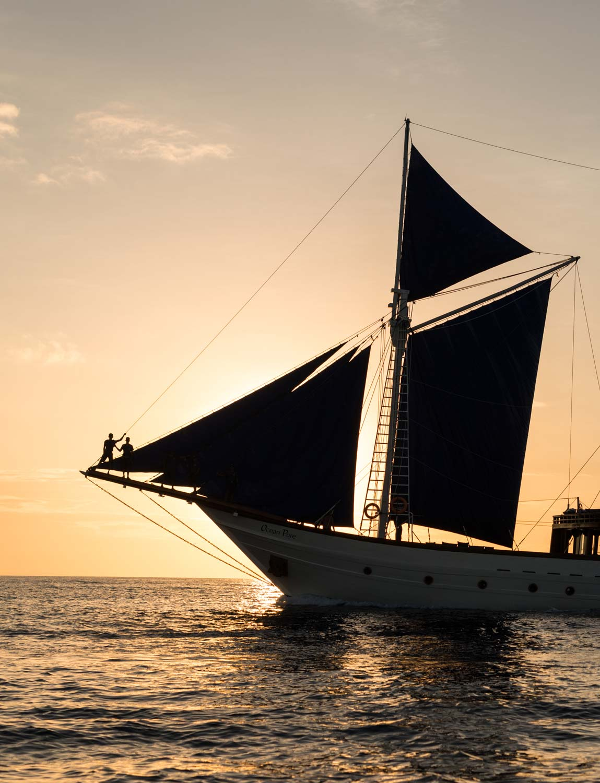 Ocean-Pure-silhouette-sunset.jpg