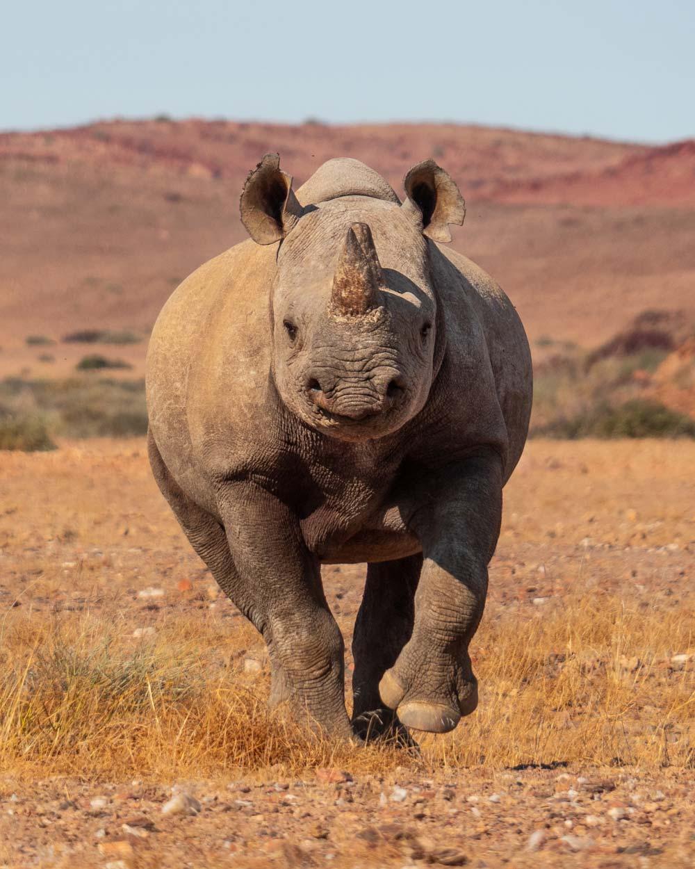 rhino-namibia-botswana-safari-frank.jpg