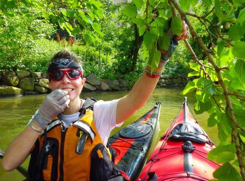 7. Harlem River: White mulberries!